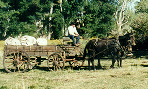 Bed_wagon__chuck_wagon_72_dpi